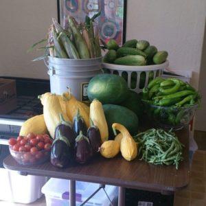 Abundia Farms abundance