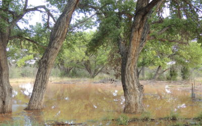 Conservation Heroes: The Mitchell's conserve and restore the Rio Grande bosque